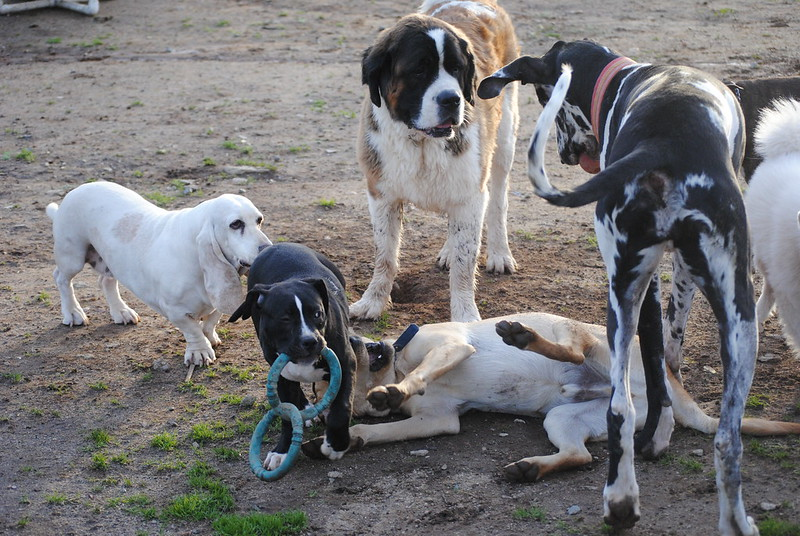 Play Smarter : The Dog Trainer's guide to creating better dog park experiences