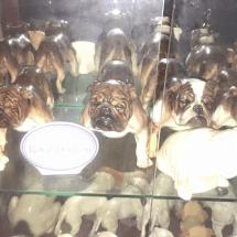 Bulldog Collection - Home Page Image 3