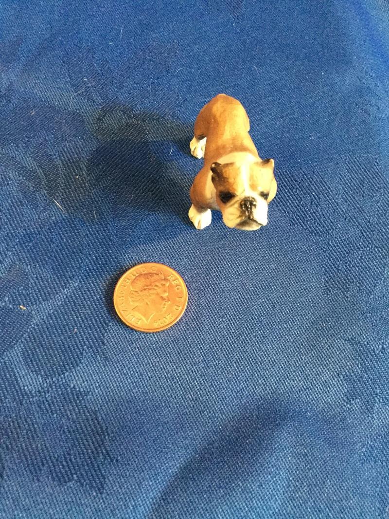Tiny version of north light bulldog