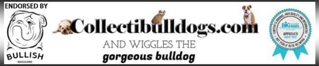 Collectibulldogs Domain Authority Rising Up