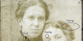 mold and foxing photo