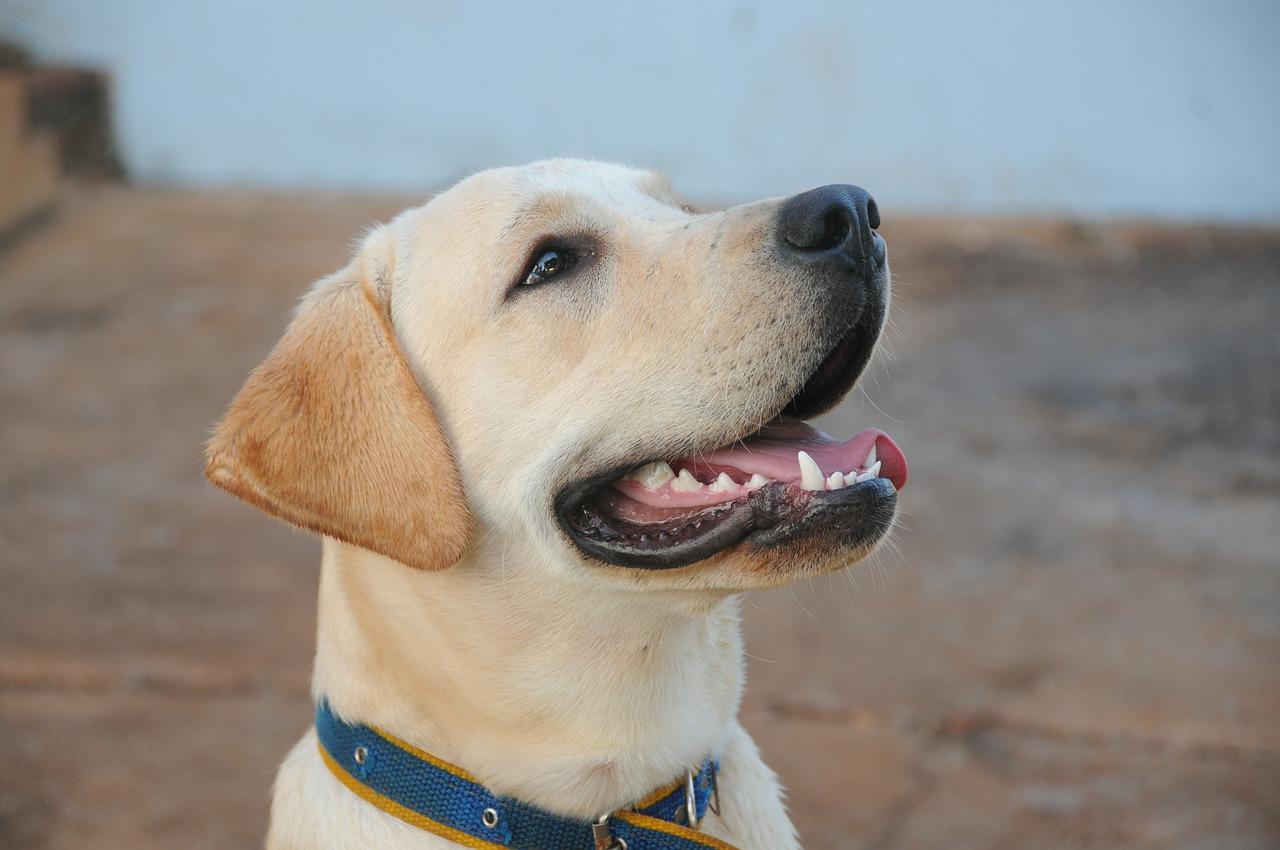 dog-434834_1280