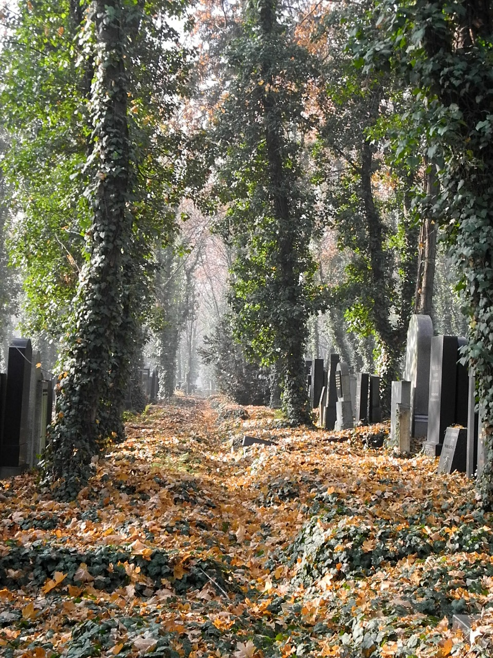 cemetery-564643_1280