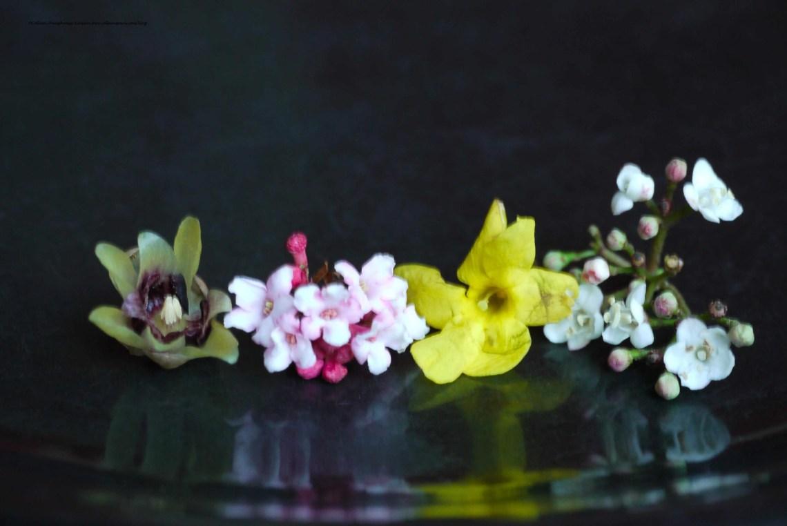 Spring flowers-Jardin des Plantes