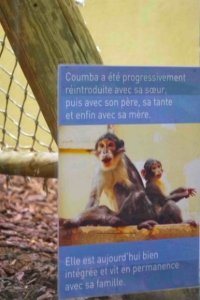 Coumba poster, Mangabey, Jardin des Plantes, Paris
