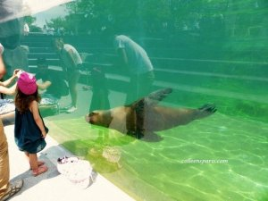 Parents and children looking at the seal in the pool after feeding time at the Paris Zoo