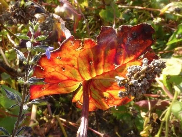 jardinsplantesleaf colleensparis