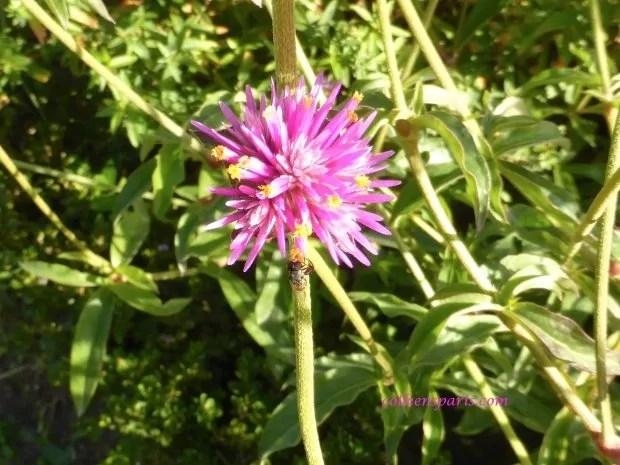jardinsplantespinkbee04 colleensparis