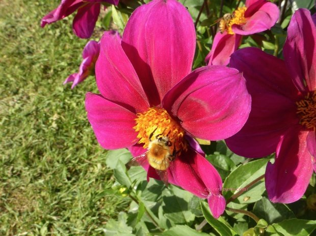 jardinsplantespinkbee07 colleensparis