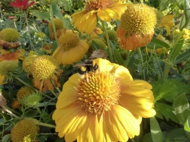 jardinsplantesyellowbee colleensparis