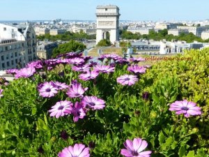 View from Raphael Hotel with flowers in the foreground and Arc de Triomphe in background