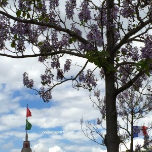 Wisteria is blooming. It must be time for the Foire de Paris (home show) last Wednesday April to second Sunday May