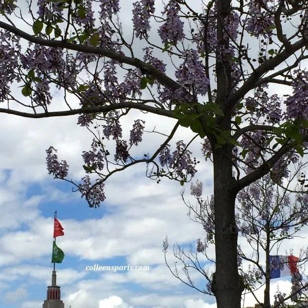 Foire Paris 2015 wisteria