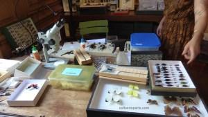 Deyrolle Curiosity Shop photo of desk and butterflies, Paris