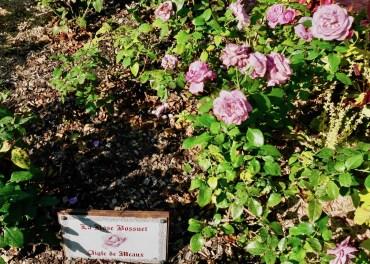 """La Rose Bossuet """"Aigle de Meaux"""""""