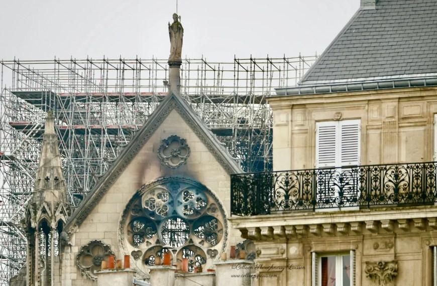 Notre-Dame de Paris: Oaks and Stone – the Latest News
