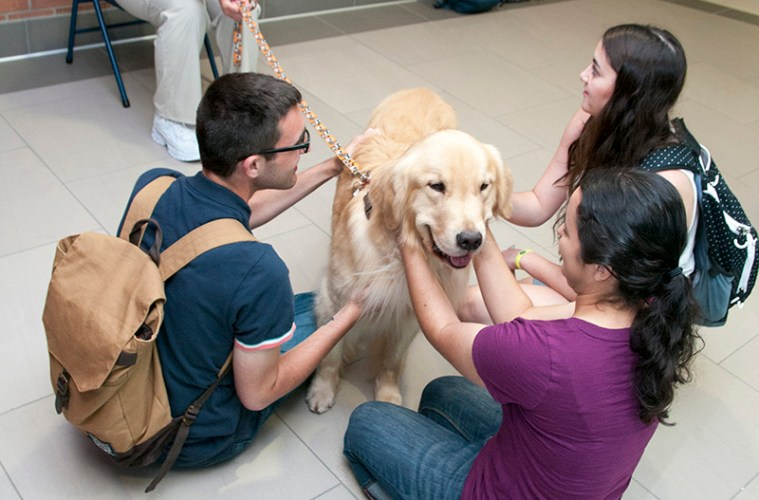 photo os students petting dog