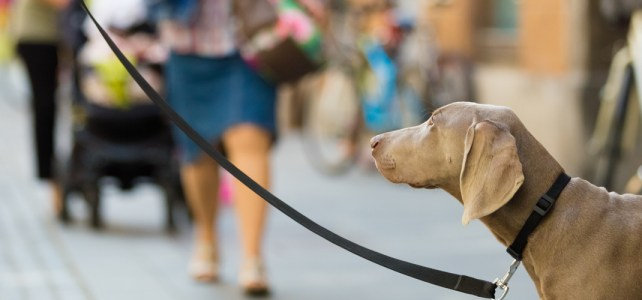 Collingswood Farmers' Market announces dog leash-permit program