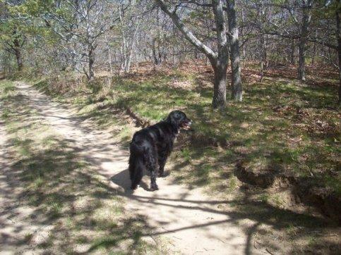 strider-2008-hike