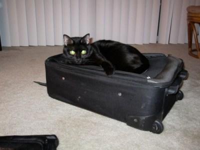 zoe-suitcase1