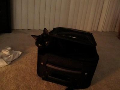 zoe-suitcase2