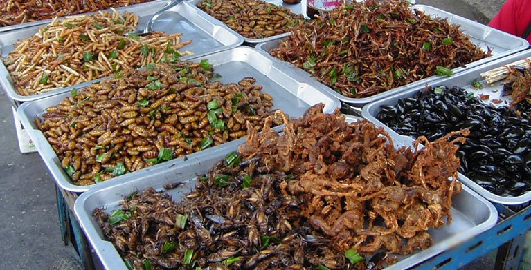 Image result for edible ants