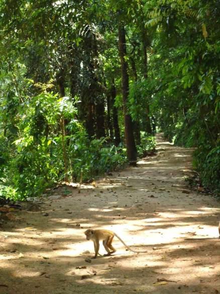 Udawattakelle Sanctuary - Photo courtesy Daily FT