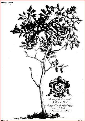 forbiddenfruit1750barbadosplates