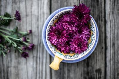 flower-base-photo-1465264232362-381617a86af6_convert_20160819152143