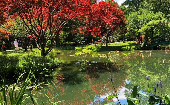 A scenery of water and a red colored tree and greens all around