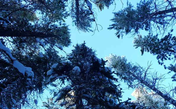 Looking up into branches filled with snow