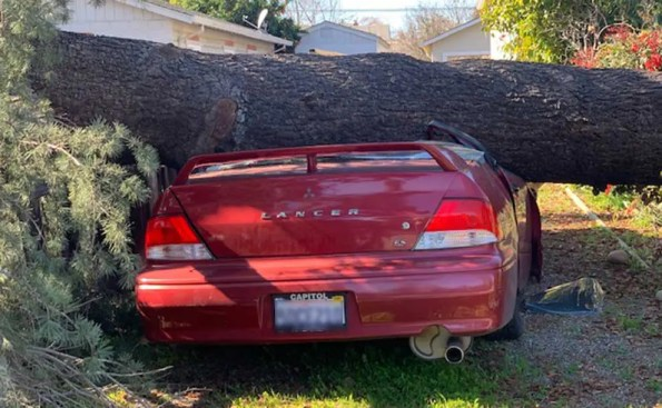 A tree on top of the hood of a red car