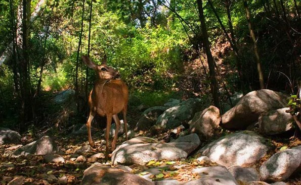 A deer in the mountains