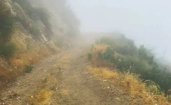 Alone in the Misty San Gabriel Mountains