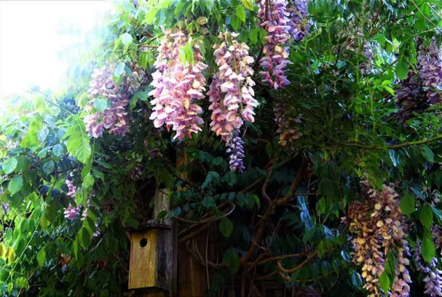a purple flowered plant above an entrance of a house