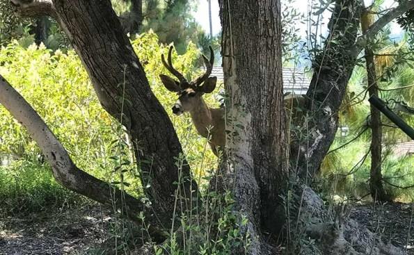 a deer in between trees