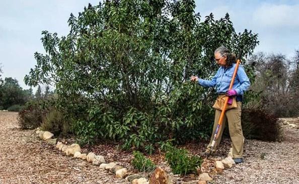 A woman holding a shovel next to a native plant