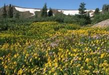 Gore Range Colorado summer snow