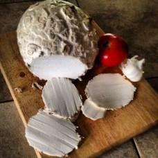 wild colorado mushrooms giant puffball