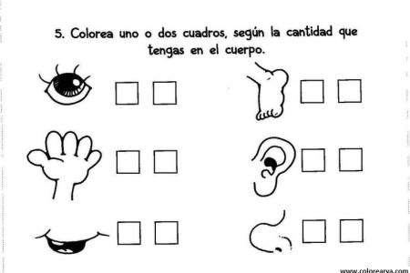 Dibujos De Nuestro Cuerpo Para Colorear picture gallery