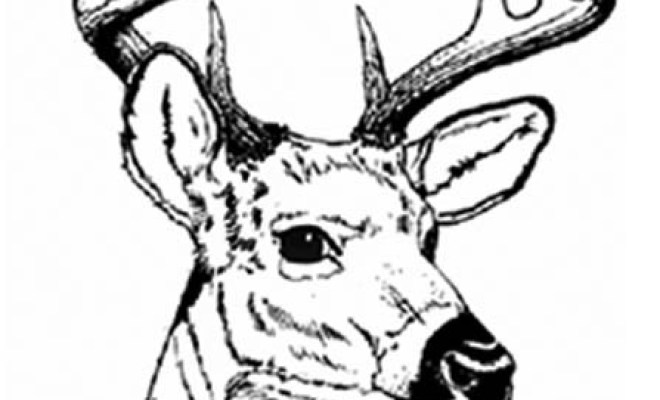 coloriage tête chevreuil dessin gratuit à imprimer