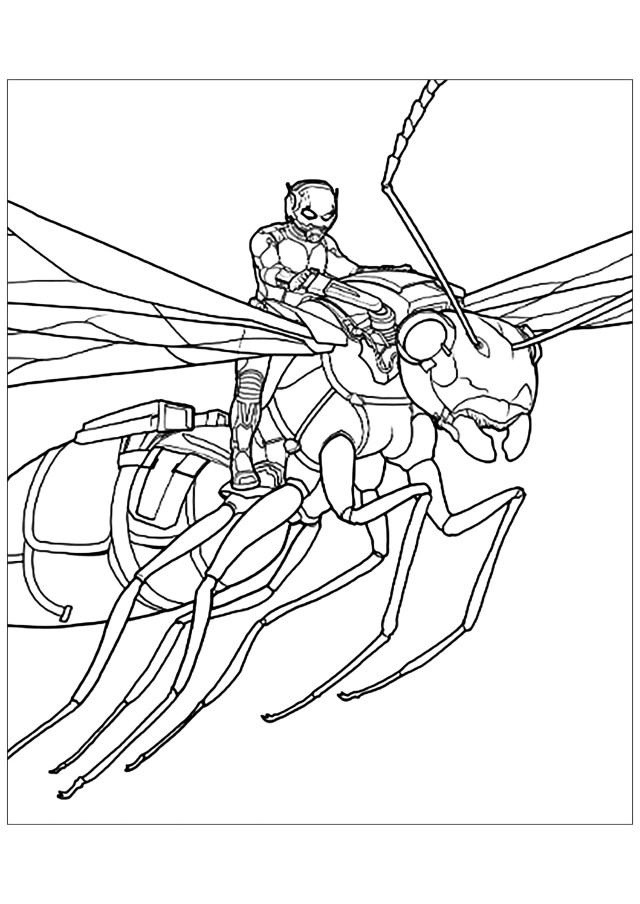 Ant man sur une fourmi à ailes - Coloriage Ant-man - Coloriages