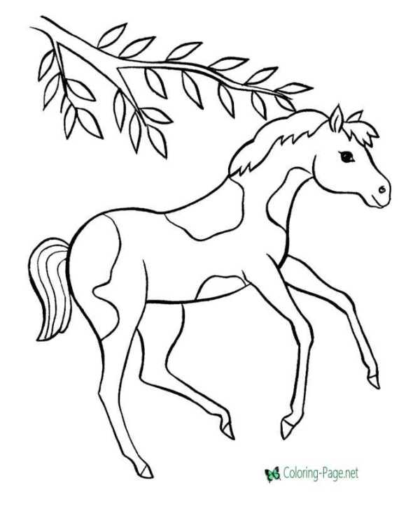 horse coloring pages # 16