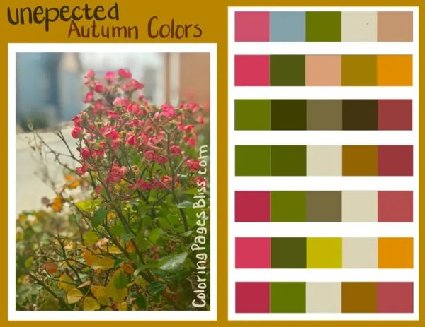 Nature Inspired Color Palettes