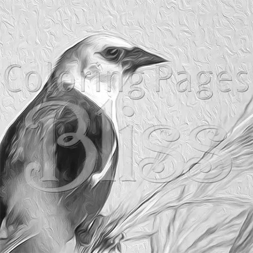 Blackbird Grayscale Coloring Page