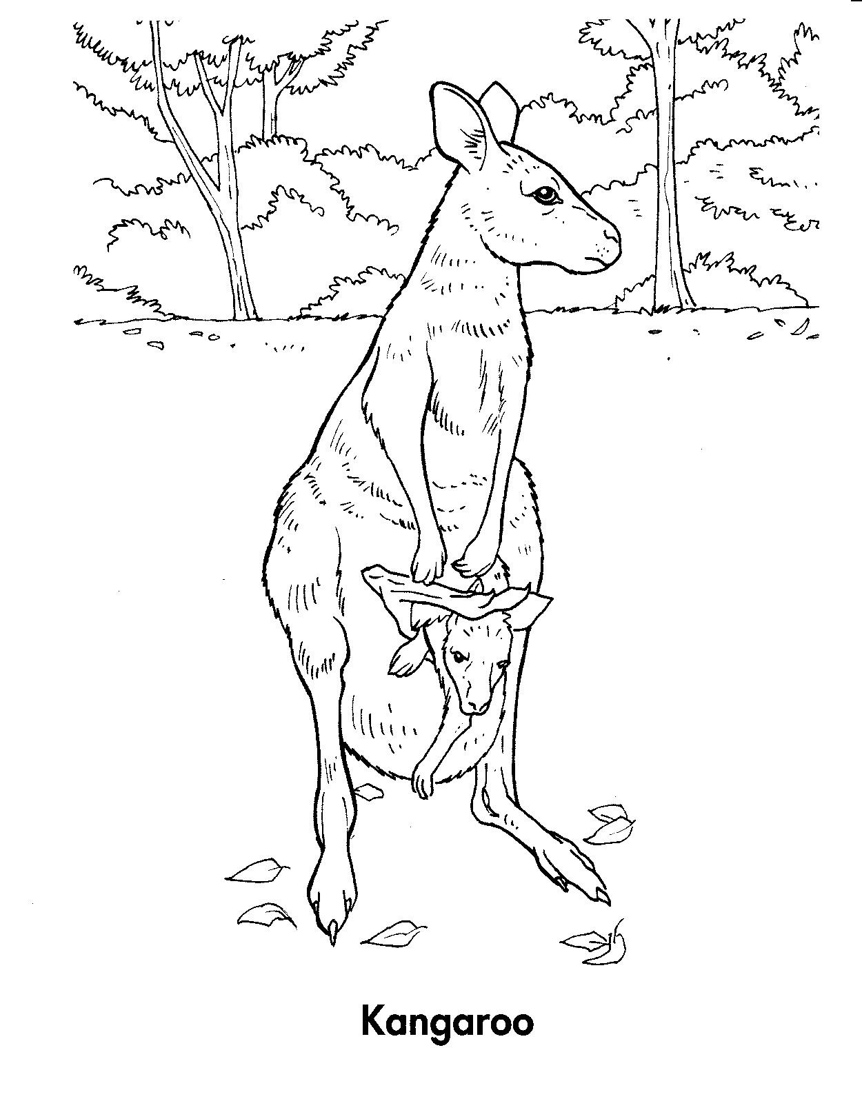 Kangaroo Printable Coloring Pages