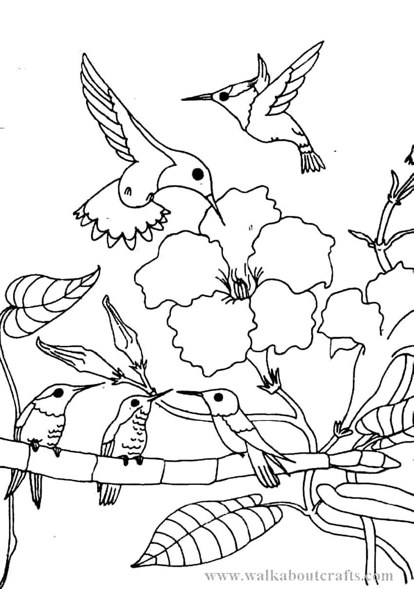 Printable Hummingbird Coloring Pages Coloringme Com