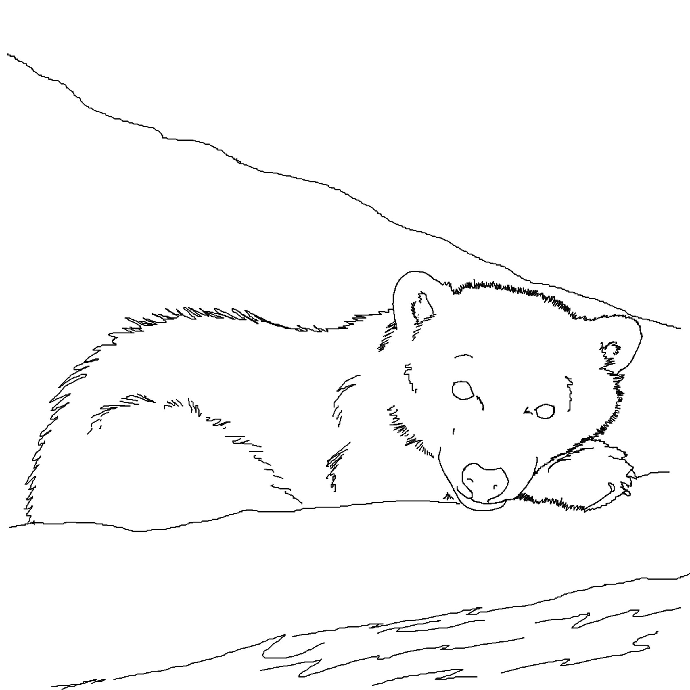 Polar Bear Face Coloring Pages