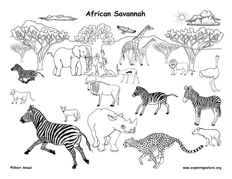 African Savanna Ecosystem Climate