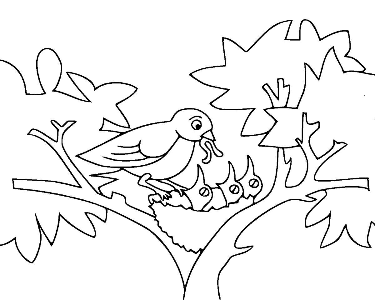 Baby Birds Coloring Page